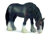 Raritäten Pferde